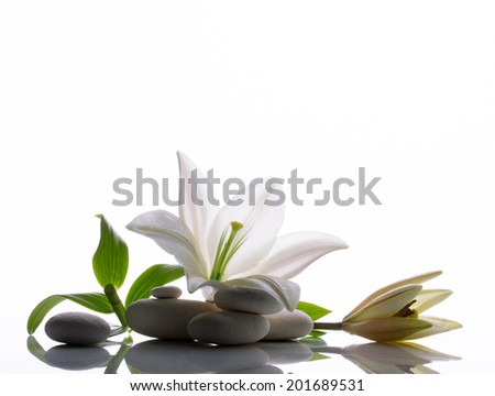 spa still life with white lily and several  stones on white reflection  background - stock photo