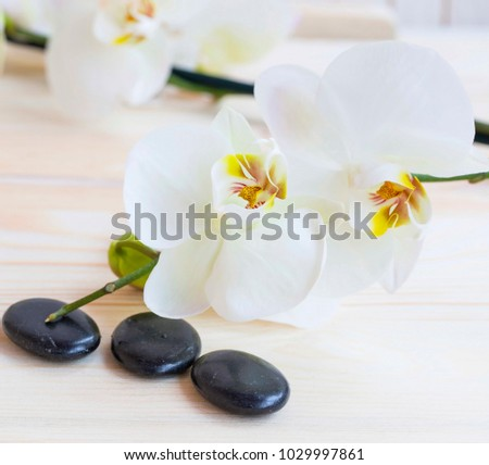 Spa still life with white orchid flowers and massage stones