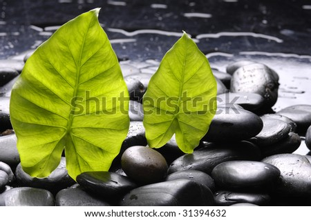 Spa stones and leaf - stock photo