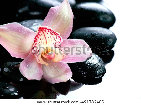Spa Stones and Orchid Flower. Stone Massage. Black Basalt Stones in water. White Background, Border design