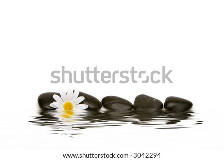 Spa stones and white daisy on isolated white background - stock photo