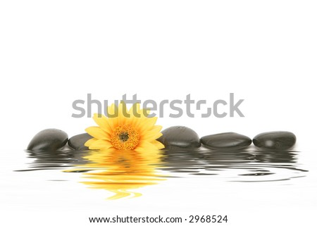 Spa stones and yellow daisy on isolated white background - stock photo