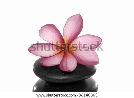 spa zen stones with pink frangipani