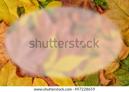 Space on autumn leaves.Blank for your text.