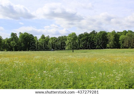 Spacious field with tractor, flowers and forest