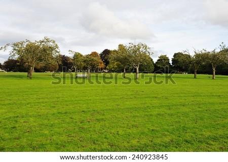 Spacious Green City Park Background - stock photo