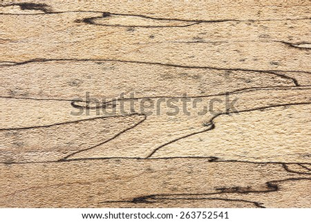 Spalted maple texture, with unique and distinctive black lines. - stock photo