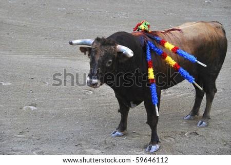 Spanish bull in the bullfighting. Corrida de Toros - stock photo