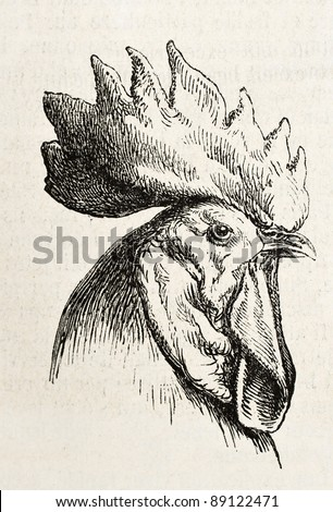 Spanish chicken head old illustration. Created by Jacque, published on L'Illustration, Journal Universel, Paris, 1858 - stock photo