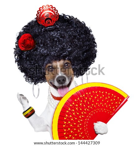 spanish flamenco dog with very big curly hair and hand fan - stock photo