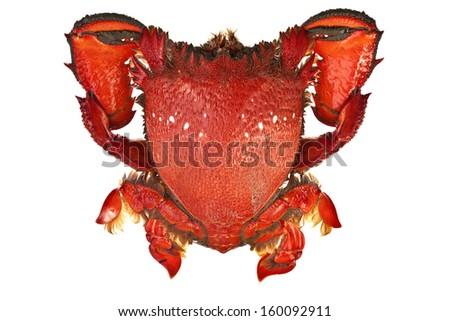 Spanner Crabs - stock photo