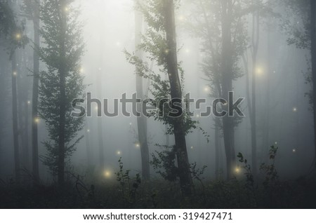 sparkles in fairytale forest - stock photo