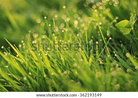 Sparkling meadow abstract summer background  fresh dew bokeh. Defoces, soft light. - stock photo