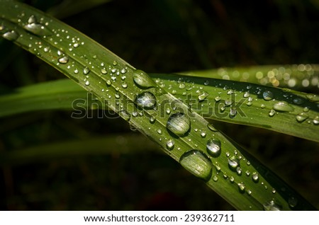sparkling water drops on the grass leaves - stock photo