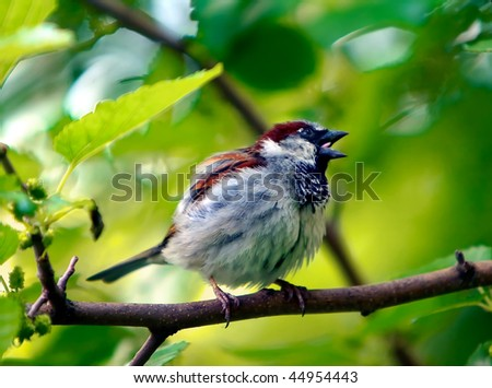 Sparrow - stock photo