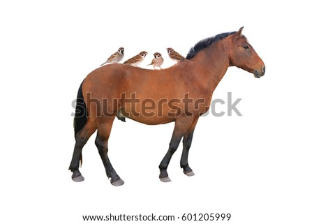 sparrow and horse live with each other 10000 years