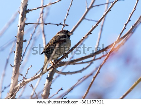 Sparrow on a tree against the blue sky