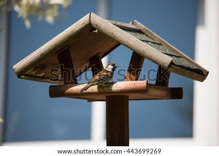 Sparrow on Bird House - stock photo