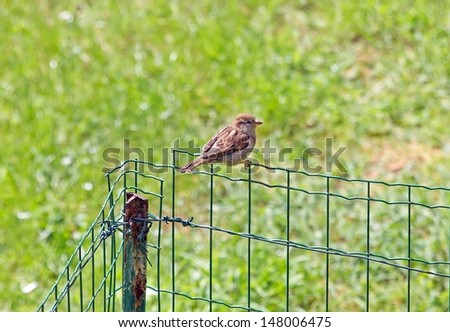 Sparrow put on barrier of garden (France Europe) - stock photo