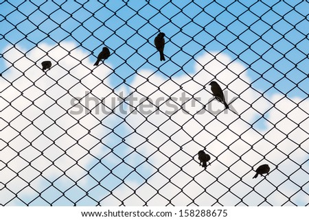 Sparrow silhouette on fence mesh - stock photo