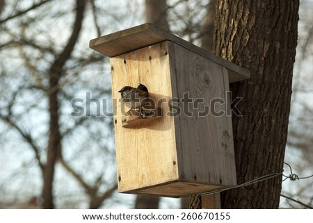 Sparrow sitting in a birdhouse - stock photo
