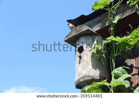 Sparrow sitting in an old nesting box against the sky in the spring - stock photo