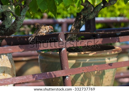 Sparrows are dried in the sun on an iron railing. - stock photo