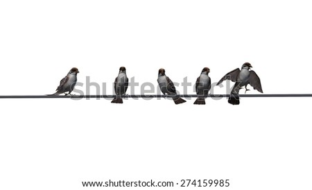 sparrows group - isolated on white background