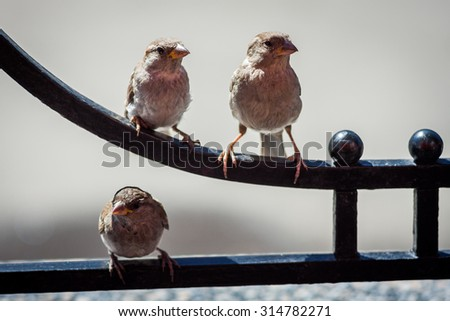 Sparrows on a city street