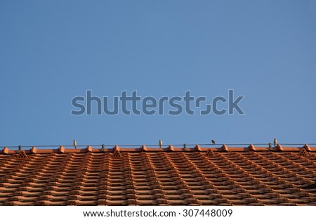 sparrows on the roof