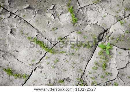 Sparse, small vegetation on the cracked earth. The origins of life. Dry weather. - stock photo