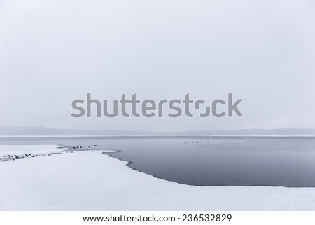 Sparse winter landscape with ducks swimming in cold water - stock photo
