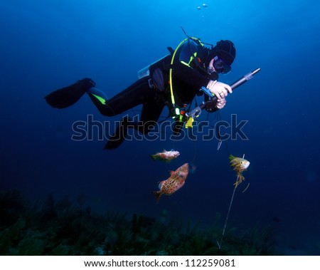 Spear fisherman with speargun - stock photo