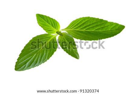 Spearmint mint leaf isolated on white background - stock photo