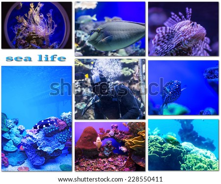 species of life underwater world of the Red Sea - stock photo