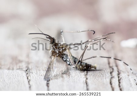 species of mosquitoes cause of malaria. - stock photo