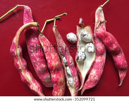 Speckled, colorful cranberry beans on a maroon background - stock photo