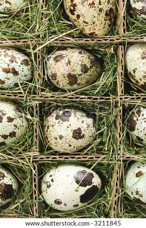 Speckled eggs packed in separate compartments.