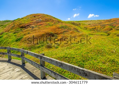 Spectacular colors of the vegetation in the summer of Phillip Island Nature Park, The Nobbies, Phillip Island, Victoria, Australia. - stock photo