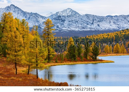 Spectacular landscape with snow capped mountains, forest and lake. Autumn time. Lake Kidelyu, Ulaganskiy pass, Altai, Siberia, Russia