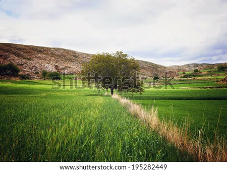 Spectacular view over agricultural landscape, where a lone tree rises. - stock photo