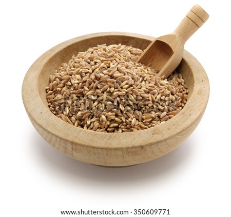 spelt, farro, primitive wheat isolated on white background