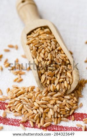 Spelt grains on a wooden scoop - stock photo
