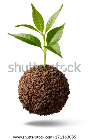 sphere shape soil with plant isolated on white - stock photo