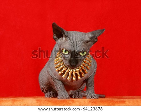 Sphinx cat on red background - stock photo