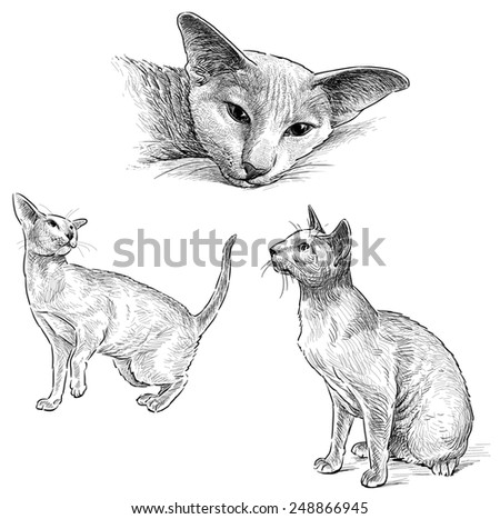how to draw a sphinx cat
