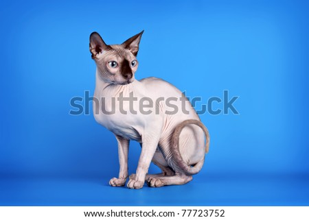 Sphinx on blue background - stock photo