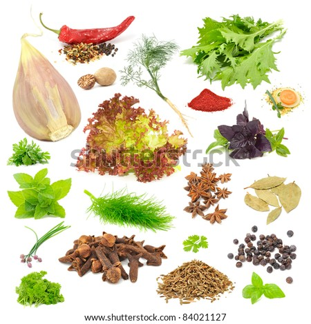 Spice & Herb Set - Garlic, Chili, Dill, Mizuna, Nutmeg, Lettuce, Parsley, Tandoori Masala, Basil, Soup Seasoning, Mint, Fennel, Anise, Bay Leaf, Chives, Cloves, Celery, Juniper Berries, Caraway Seeds - stock photo