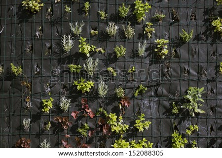Spice herbs wall  - stock photo