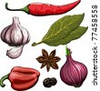 Spice. Onion, garlic, pepper, bay leaf, hot pepper drawing woodcut method. Raster version - stock vector